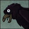 crazy raven