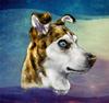huskyjackal [userpic]