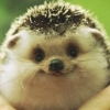 happy hedgehog