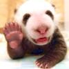 revengerv: panda