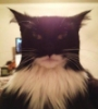 чёткий кот