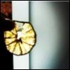 limon_peel userpic