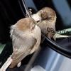 птичка зеркало машина