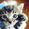 butterrumcat userpic
