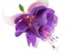 aroma2013 userpic