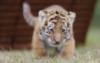 tigrenok1983 userpic