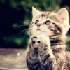 saltedboots: cat: praying