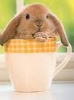 bunny in cup
