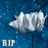 lijahlover: R.I.P white flowers icon