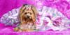 зоомагазин, комбинезон для собак, одежда для больших собак, Одежда для собак, дождевик для собак