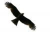 schwarzeradler userpic