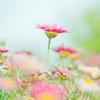 flower_essence