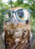 Grammy (aka Sandy): Grammy Owl