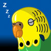 sleepy budgie me