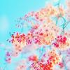 ale_irenear: flores