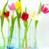 GEN - Tulips in vases