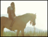 horseloverii