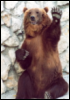 bear_mad_show userpic