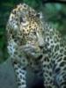 leopardik_ru userpic