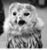 passionate_owl