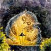 Сова: сова с совенком