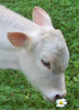 cattlework userpic