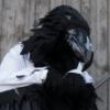 tutu, mytho, princess, prince, raven
