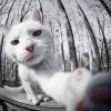 gerodoth userpic