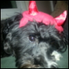 devil-puppy