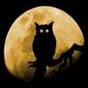 owl_b userpic