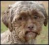 Укоризненная собака