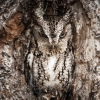 Owl in hole