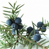 juniperus userpic
