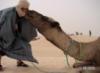 легче верблюду объяснить
