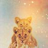 stock leopards - ginia_no_niwa
