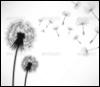dande_lyon userpic