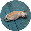 doggy_spike userpic