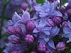 fleurinne