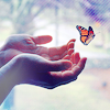 damnfantastic: butterfly