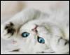 white_kitty_25 userpic