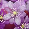 blessed_neshika userpic