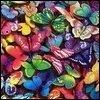 Butterflies in Rainbow Colors