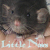 little_noses userpic