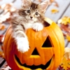 Halloween tabby cat by roxicons