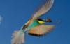 птица ловит бабочку