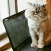 writing - grumpy cat, cats - grumpy laptop