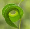 spiraling_mind
