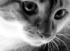 rofa_k userpic