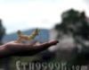 etnocook userpic