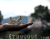 етнокук, etnocook